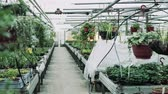 estufa : Interior of a large greenhouse with pots of plants.