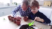 semente : Senior grandfather with small grandson sowing seeds at home.