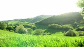 Форрест : Panoramic view of landscape of meadows and woodland. Sunset in nature. Стоковые видеозаписи