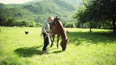 otlatmak : A senior man holding a horse grazing on a pasture. Stok Video