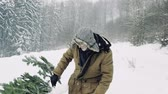 toboztermő fa : Senior man getting a Christmas tree in forest, pulling it.