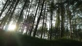 The sun shines through the trees in the forest Wideo