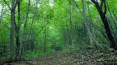 пеший туризм : Summer green forest in the daytime