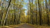 horta : Stroll through the autumn forest. Concept, brown. Stock Footage