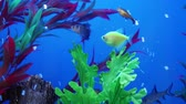 Fish in aquarium. Background, world.