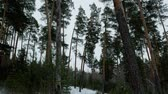 cam : Walking in the winter forest during the daytime