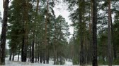 zima : Walking in the winter forest during the daytime