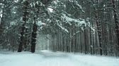 pintura : Beautiful winter forest