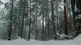 de neve : Beautiful winter forest