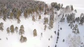 plus : Flying over winter fir trees