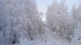 Fly Through The Frost Trees Stock Footage