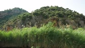 Tall grass hides green island