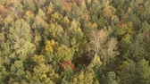 farba : Autumn Leafy Forest In From Above