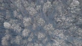 field ice : Winter frosty forest in a winter day aerial view Stock Footage