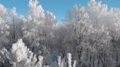 field ice : View of a beautiful winter frosty forest, where the trees are all in white hoarfrost Stock Footage