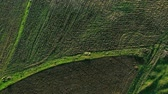 aerial view of a field Wideo