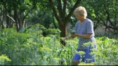erva doce : Middle aged woman in striped T-shirt harvesting dill by hands in the garden.