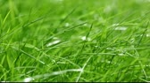 веточка : New fresh green garden grass flapping in the wind