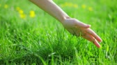 health : Fresh new green grass caressed by woman hand, closeup view