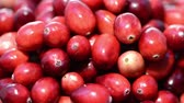 Portion of Rotating Cranberries (loopable HD Video file)