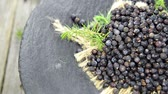 ingredient : Juniper Berries Background (loopable) Stock Footage
