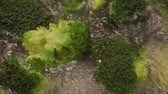 freshness : Cooking Broccoli (in a pot) Stock Footage