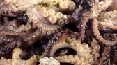 meal : Rotating Octopus Salad (not seamless loopable) as 4K UHD video Stock Footage