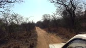 game reserve : Game Drive in Matobos NP (Zimbabwe) as detailed 4K UHD footage Stock Footage