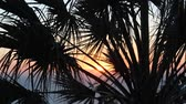 soyut : Sunset ocean with palm trees blurry focus