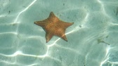 denizyıldızı : starfish underwater - sea star in water