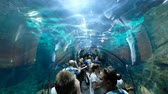 group of children : People in underwater tunnel aquarium at the Loro Park in Tenerife Stock Footage