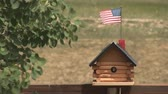 male animal : Bird flies out of bird house Stock Footage