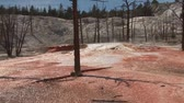 явление : Mammoth Hot Springs in Yellowstone National Park