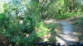 bisiklete binme : Mountain biking in a Central Florida park Stok Video
