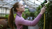 waterhose : Young smiling female gardener in uniform watering plants with garden hose in greenhouse. Slowmotion shot