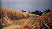 krajobraz : A sweeping shot of some beautiful farmers fields and ripe wheat crops in the midwest in 1940.