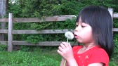 válka : A cute little Asian girl tries and tries to blow a dandelion and then her father comes in and blows the seeds all over her face.
