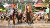 auspicioso : AYUTTHAYA, THAILAND - APR 13: Revelers and elephants join in water splashing during Songkran Festival on Apr 13, 2015 in Ayutthaya, Thailand. The water festival has been observed as Thai New Year. Stock Footage