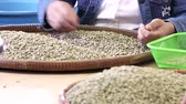 sorting : Workers pick out Broken coffee beans are not in quality control