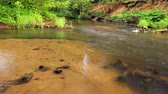 wet : Forest river, beautiful beaches thickets gorgeous green plants, slow motion, running water, serenity of nature.