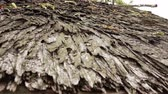 door : the eco-friendly  roof from bark