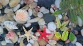 Pebble stones, seashell, starfish in crystal clear water.