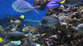 Underwater scene with colorful tropical fishes Stok Video