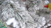 snow covered spruce : Toy ball hanging on spruce branch in winter outdoors. Stock Footage