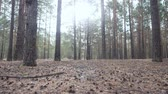 szyszka : Beautiful tranquil forest in autumn time