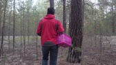 Man with a basket walks in the coniferous forest and looks for mushrooms. Stok Video