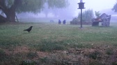 gardens : The crow flies to the feeding place in the fog
