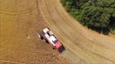 cultivated land : AERIAL: Flying above the farmer cutting crop with combine on beautiful golden yellow wheat field in sunny summer Stock Footage