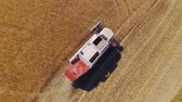 mowing : AERIAL CLOSE UP: Flying close above the agricultural combine harvesting golden vast wheat field in sunny summer