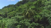 акация : AERIAL: Flying above beautiful lush green jungle with palm trees and dense acacia trees growing on big mountains on tropical island in sunny summer